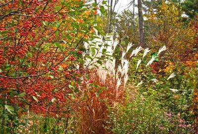 Suzanne Albinson's garden