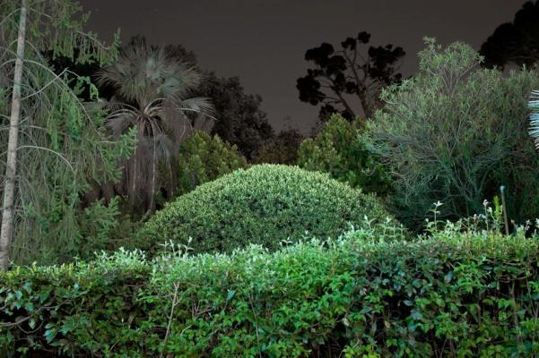 Villa Strohl-fern night copyright Lauren Kalfala