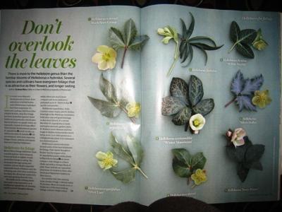 The Garden copyright Anne Wareham
