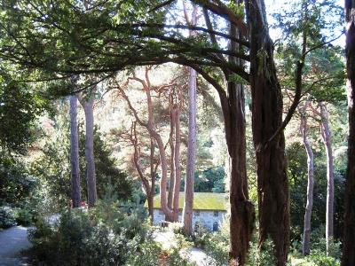 Bodnant trees copyright Anne Wareham for thinkingardens, Veddw, Monmouthshire, South Wales garden