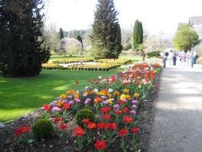 Bodnant, tulips. Copyright Anne Wareham