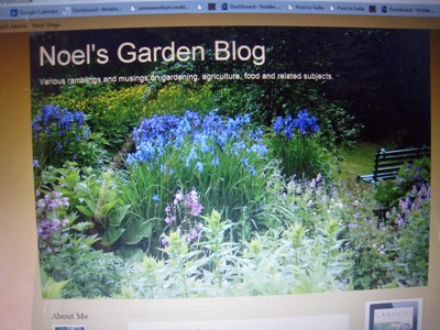 Noel's Blog 1 copyright Anne Wareham