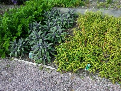 Herbs in Lower Walled Garden© Anne Wareham Thinkingardens, think gardens, think in gardens, Aberglasney, Aberglasney Garden, South Wales Garden, Welsh garden, Anne Wareham, Veddw, garden review