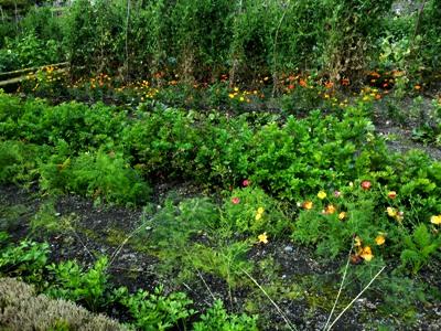 Upper Walled garden  © Anne Wareham Thinkingardens, think gardens, think in gardens, Aberglasney, Aberglasney Garden, South Wales Garden, Welsh garden, Anne Wareham, Veddw, garden review