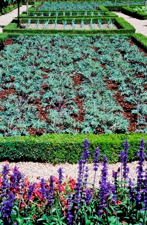 section of the potager at Villandry, Loire, France copyright Charles Hawes for thinkingardens