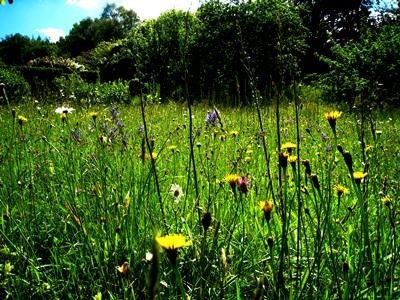 Meadow at Veddw copyright Anne Wareham