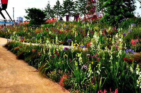 South African area in London Olympic Park designed by James Hitchmough copyright Noel Kingsbury on thinkingardens