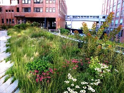 High Line, New York, Credit Piet Oudolf Copyright Noel Kingsbury on thinkingardens