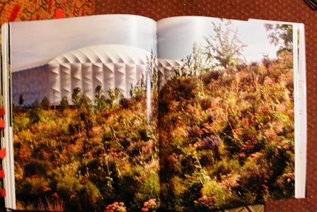 Olympic Park from The New English Garden on thinkingardens copyright Anne Wareham