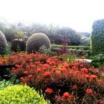 Front Garden, Veddw, Copyright Anne Wareham