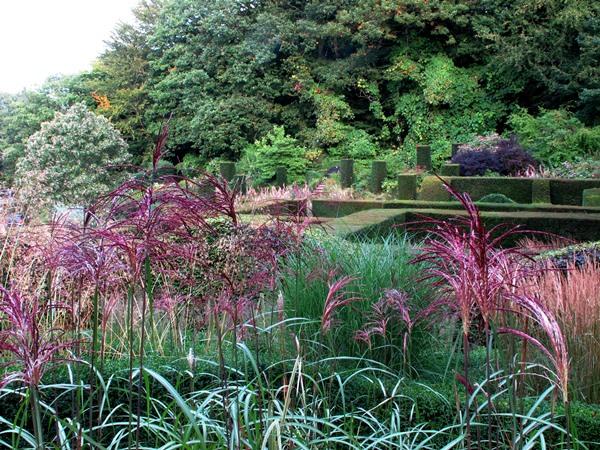 Grasses  Veddw 150 View across grasses copyright Anne Wareham for thinkingardens