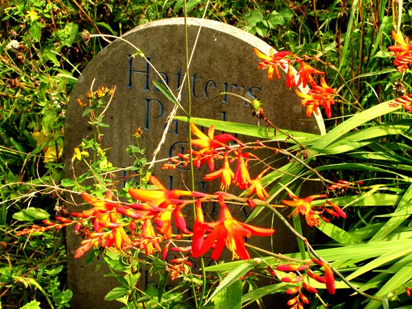 Wild garden Veddw mid August copyright Anne Wareham  for thinkingardens