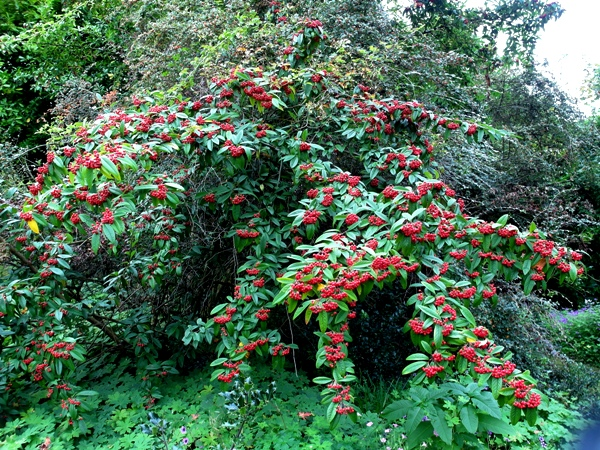 Garden Design Garden Design with evergreen shrubs for landscaping