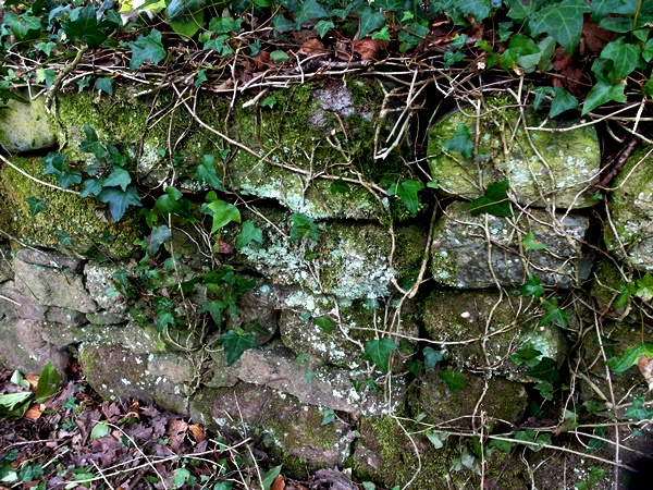 Dry stone wall at Veddw SAM_9728
