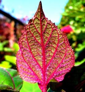 TG leaf Copyright Anne Wareham SAM_8427