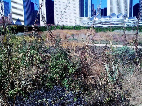 Millenium_Park_Chicago-Nov-1 Copyright Mark Laurence