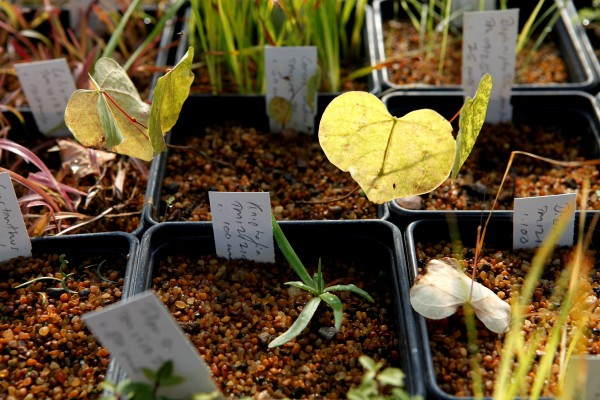 Evolution Plants Copyright Charles Hawes _MG_8291
