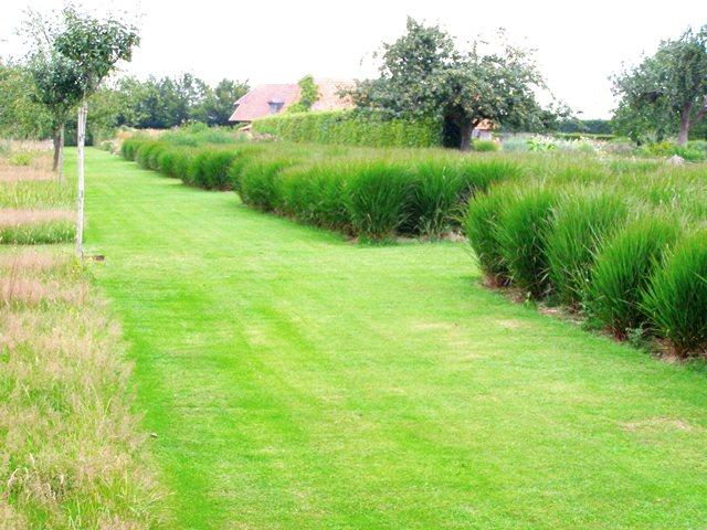 Jardin Plume Copyright Adam Hodge Grasses P7210264 (2)